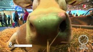 Salon de l agriculture decouvrir les animaux et de