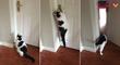 Le chat qui ouvre les portes