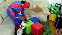 Spidermans Farting POOP Pug BAD DOG is Turned Into a Toy! Spiderman vs Joker PRANK! Spider Crazy