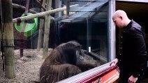 Découvrez comment un orang-outan fait de la magie