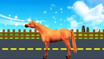 3D Horse Injection Colours Songs ,  Colours Songs For Kids ,  Colours Rhymes For Children