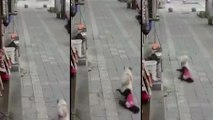 Un chien se fait une balade avec un autre chien