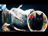Giải thích nào cho hiện tượng xác chết sống lại khi có mèo đen nhảy qua