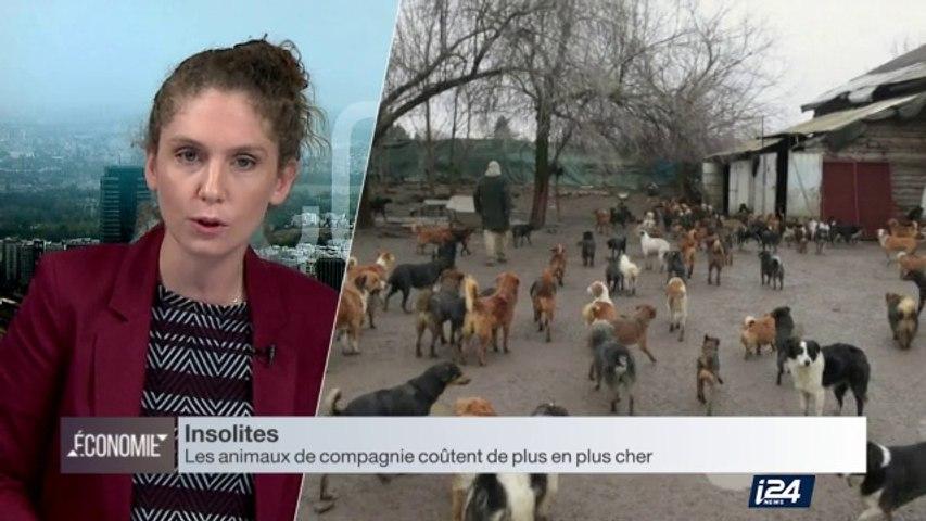 Insolites : le boom du marché des animaux domestiques, et celui des cosmétiques anti-pollution