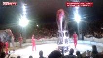 Ce pauvre éléphant chute en faisant le poirier pendant un numéro de cirque