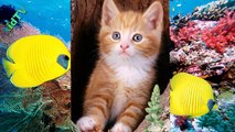 Divertidos gatos y los gatos!Te harán sonreír!Videos de bromas!