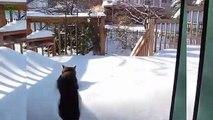 Funny Bread Cat Videos lation 2013