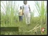 Martinique terres polluées