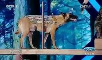 Dog Of The Year|| Dog Skills || 2017