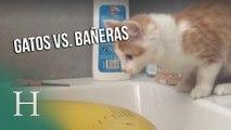 Gatos vs. bañeras