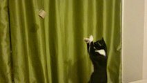 Cat tries to catch dangling object too far away