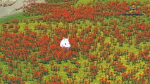 Los colores de los Animales para Niños de la Familia Dedo   3D de la Cabeza de León de Dinosaurios Gorila Colores de Canciones Col