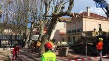 Saint-Tropez: Les platanes de la place des Lices abattus