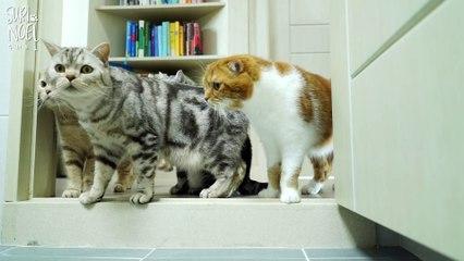 """I want to go out"" Talking Cat Suri's Bath Time 나갈래  말하는 고양이 수리 목욕하다"