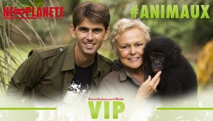[VIP] Chanee sur la terre des bonobos