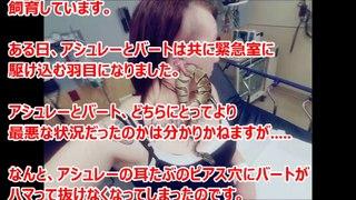 酷い耳の痛みで緊急室に駆け込んだ女性。医