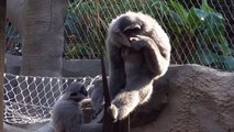 Un singe refuse de partager son repas !