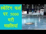 Japanese skating rink froze 5,000 dead fish in the ice, watch video | वनइंडिया हिन्दी