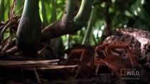 En pleine forêt, un scientifique tombe sur la plus grosse araignée du monde