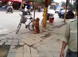 Cão vigia a bicicleta do dono - Confira o que acontece no momento em que o homem retorna.
