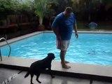 Après le chien sauveteur voici le chien qui te pousse à l'eau...