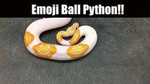 Ce python albinos a des tâches en forme de smileys