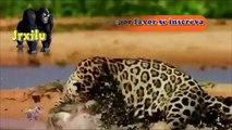 Top animais selvagens #1065, Animais selvagens atacando, Animals, Confrontos animais, Serpentes atacando animais e humanos, Lince, Piton birmanesa, Wild life, Reino animal, Animals, animais em extinção, animais marinhos, vida animal, filme -18ans, lion vs