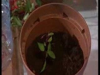 Visionnez les Cours Vidéo de Fuchsia - Conseils de Jardinage