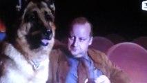 """Kommissar Rex : """"Rex au cinema """""""