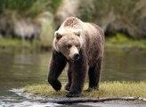 Top animais selvagens #183c, Animais selvagens atacando, Animals, Confrontos animais, Serpentes atacando animais e human