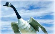 Wawa Goose Statue Postcard, Wawa Canada