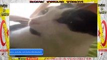 I Love You Kelimesini Bir 'de Kedi 'den Dinleyin  Komik Video lar izle