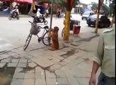 Ce chien monte attentivement la garde près de ce vélo - mais regardez bien sa réaction au retour de son maître.