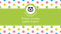 50 male cat names popular in Spain - www.namesoftheworld.net