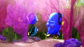 Finding Dory Little Dory Babyui