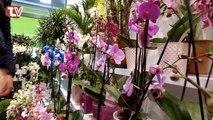 PUB LOCALE - PARTENAIRE 02 Fleurs - Pour tous vos événements !