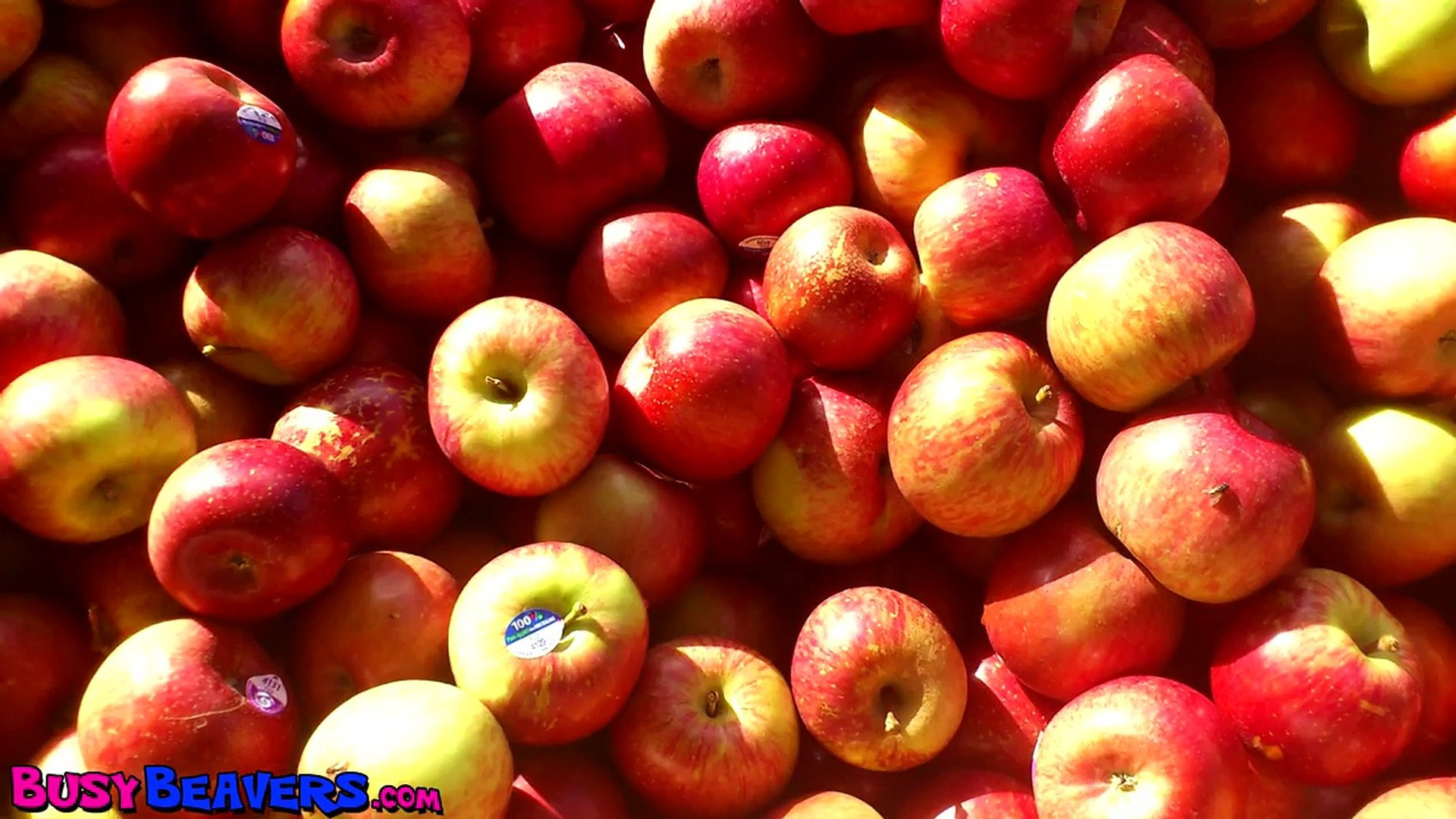 Apples are Yummy CLIP Kindergarden Songs, Preschool Education, Kid Songs