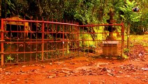 Haunted tree in Kerala Haunted places in India  Tourist destination in Wayanad