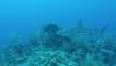 In the Field: Scuba Diving Belize's Half Moon Caye Wall