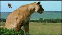 Top animais selvagens, Animais selvagens atacando, Animals, Confrontos animais, Serpentes atacando animais e humanos, Lince, Piton birmanesa, Wild life, Reino animal, Animals, animais em extinção, animais marinhos, vida animal, filme -18ans, lion vs man,