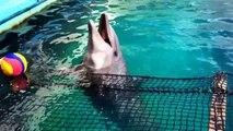 Osaka, Japan Public Aquarium - Arapaima - Pacu - Stingrays - Discus - Green Terrors - Seve