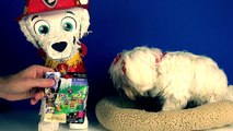 DOG with hands opening Play Doh Surprise Eggs! toys Uggly Pets Monster Jam puppies videos
