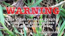 Spider Wasp Kills Giant Spider Aliens In Nature Scary Spider Control-n2A1Ys