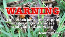 Spider Wasp Kills Giant Spider Aliens In Nature Scary Spider Control-n