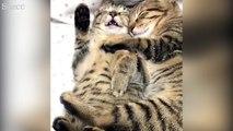 Kardeş kardeş uyuyorlar