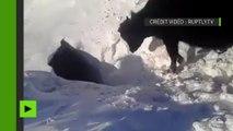 Mystères du Kazakhstan : un troupeau de vaches disparaît dans un trou enneigé