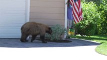 Un homme se retrouve face à face avec un ours