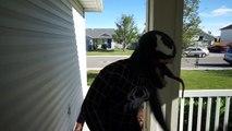 Spiderman Vs King Kong / Gorilla   Black Spiderman turns into Gorilla In Real Life Movie!: