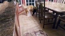 Séparé pendant quelques semaines, découvrez les émouvantes retrouvailles entre un chat et un chien !