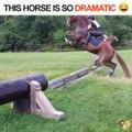 Il en fait pas un peu trop le cheval là... C'est juste un petit obstacle